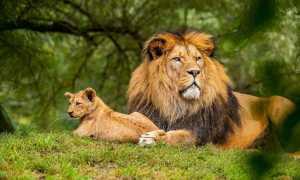Что такое камень рождения Льва?