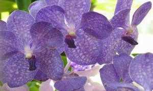 Какие цветы подарить Водолею-женщине